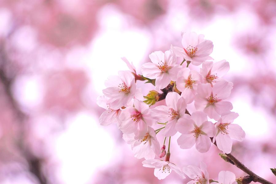 桜の季節「小規模事業者持続化補助金」はいつ開始?